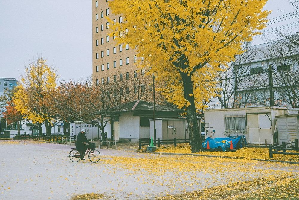 Nông thôn Nhật Bản - ảnh 18