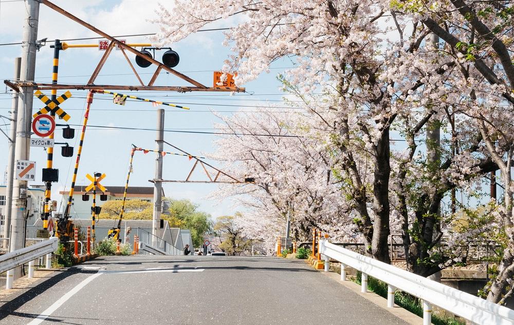 Nông thôn Nhật Bản - ảnh 4